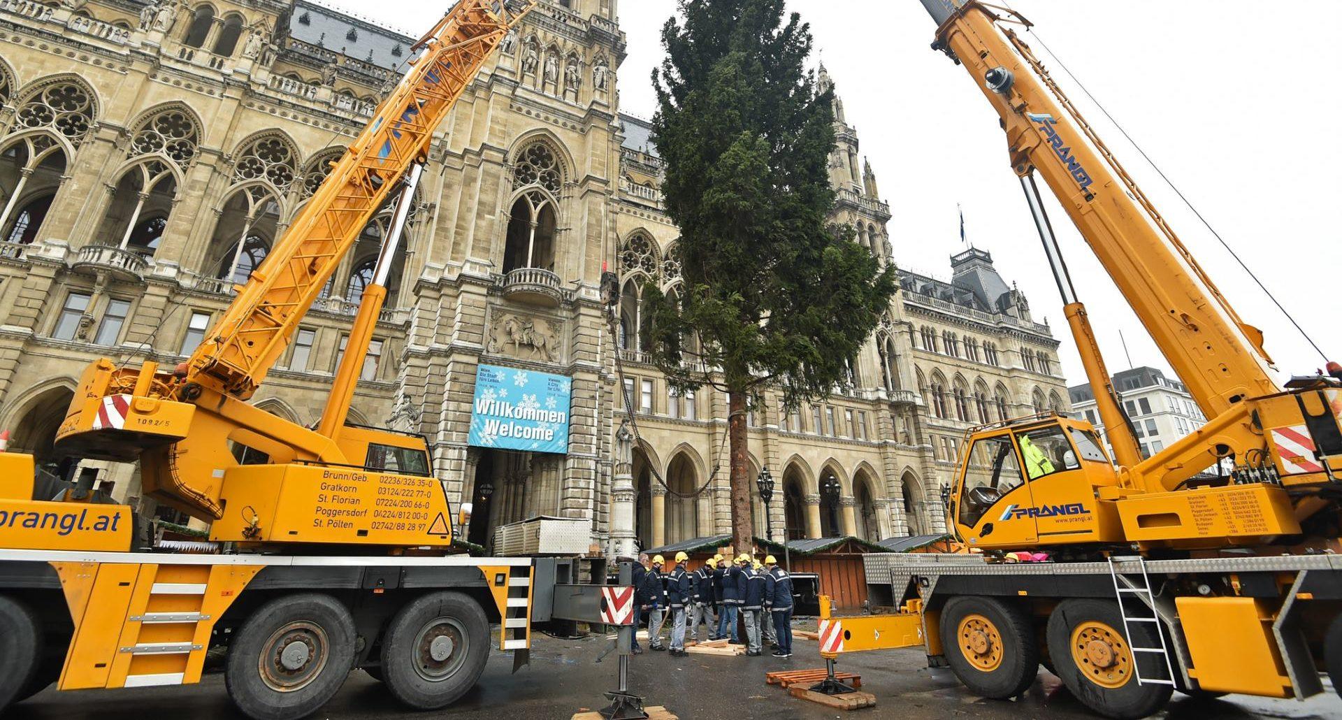 Božićno drvce u Grad Beč stiglo iz austrijske pokrajine Vorarlberg