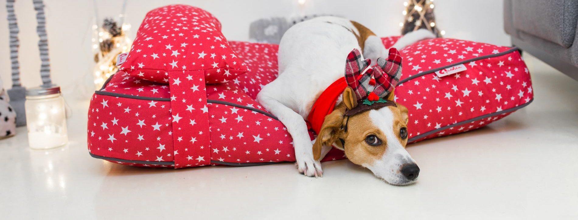VIDEO: Psi smiruju i poboljšavaju raspoloženje djece u bolnici