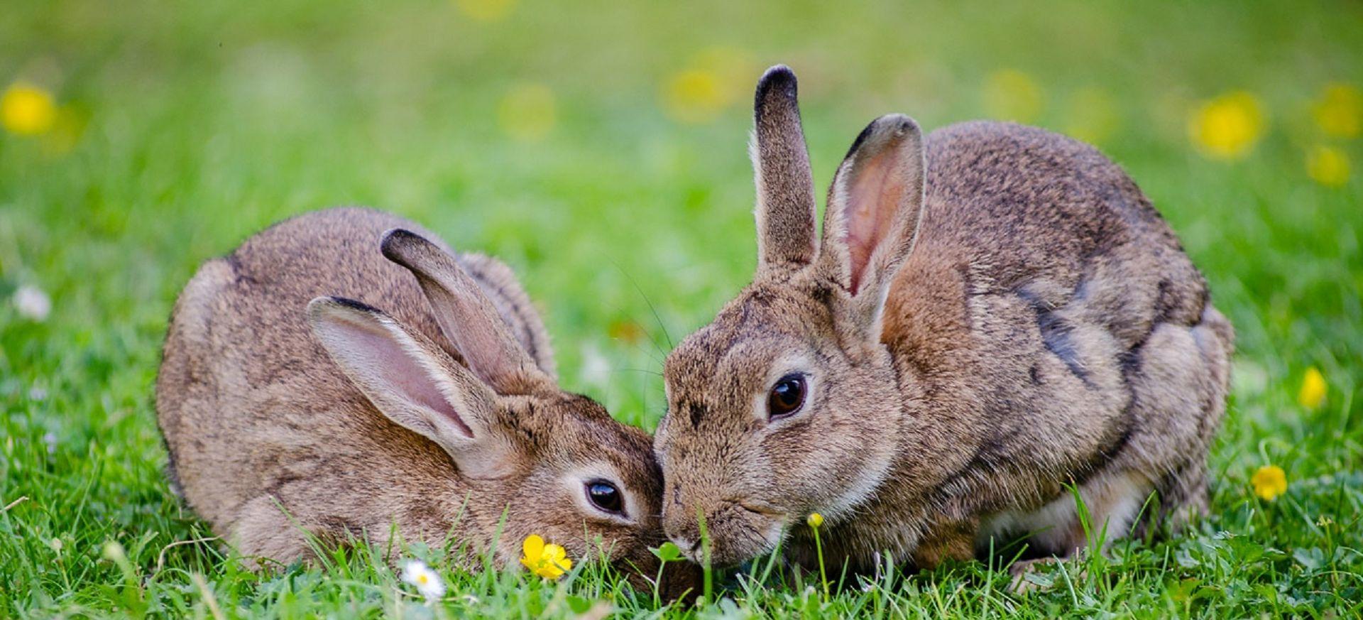 """NAVALI NARODE Poljska vlada pozvala građane da se """"razmožavaju poput zečeva"""""""