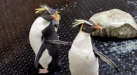 Pingvini kao jedini posjetitelji velikog akvarija