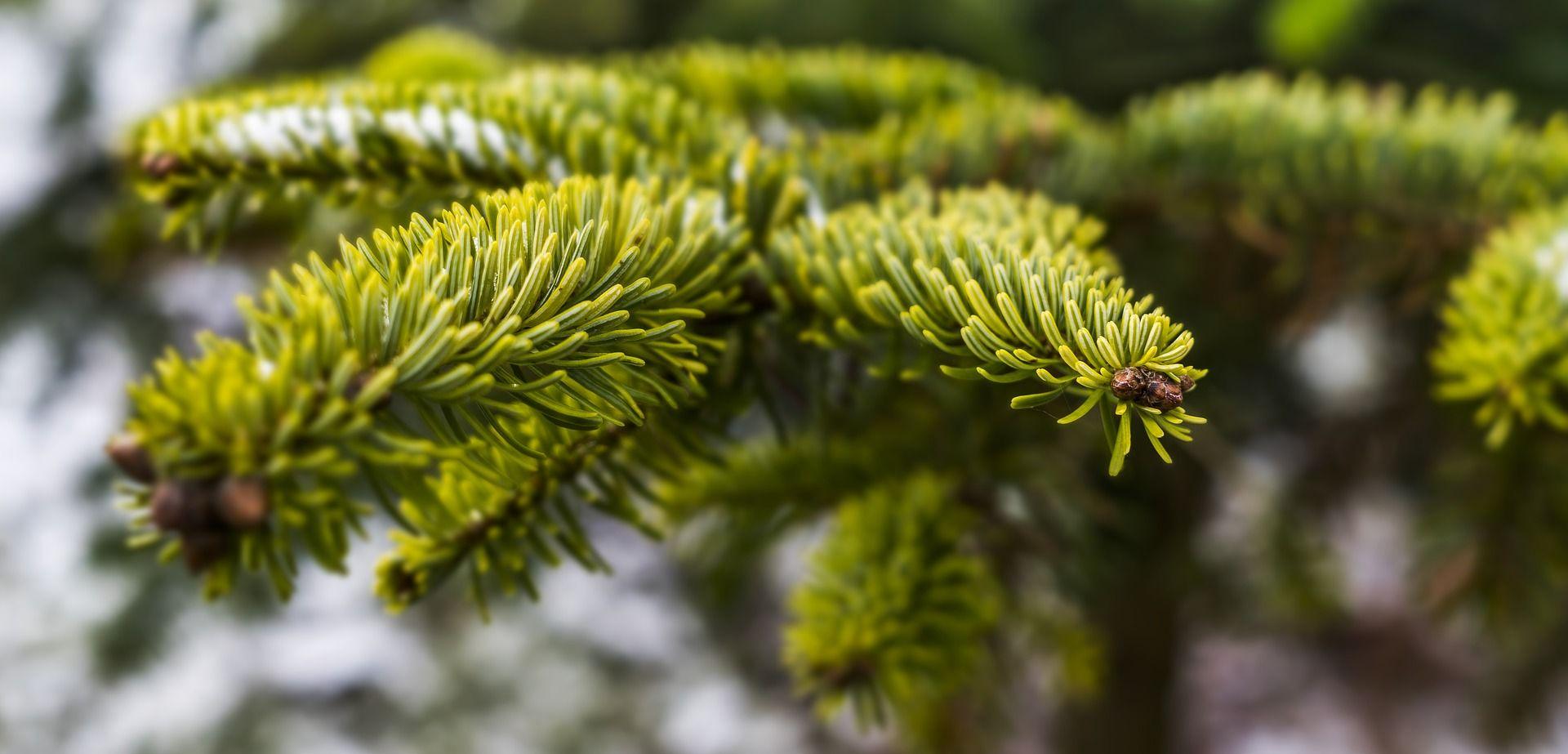 Afera s preskupim božićnim drvcem trese upravu Beograda