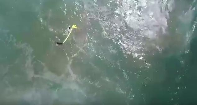 Plivače u nevolji spasio dron, puno je brži od ljudskih spasilaca