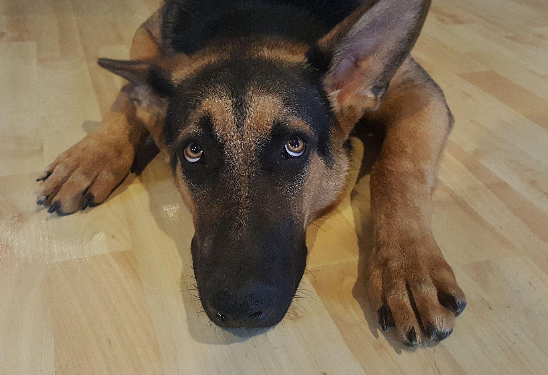 Sklonište za nezbrinute životinje zbog pirotehnike s ulica sklonilo 21 psa