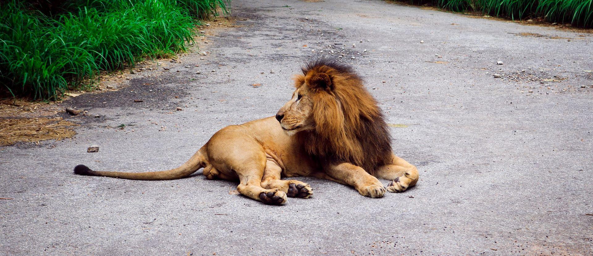 JAR Hrvat Pero Jelinić ubijen u lovu na lavove