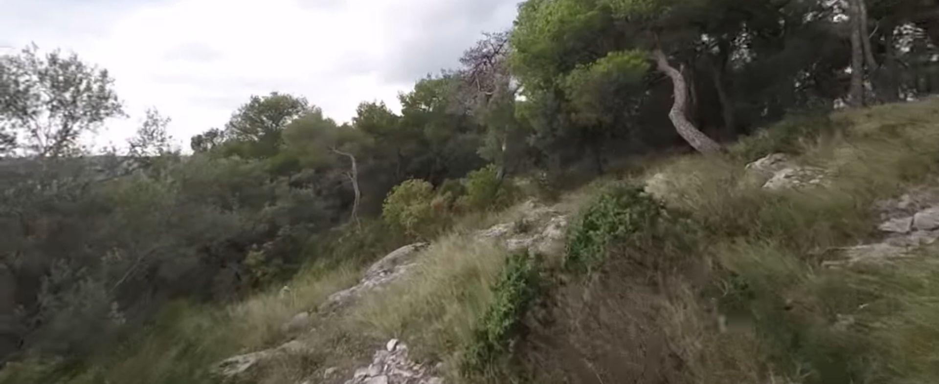 Na Marjanu osušena i zaražena petina stabala