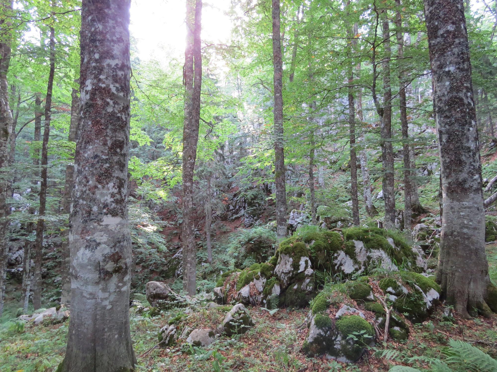 Predane povelje u povodu upisa hrvatskih bukovih šuma na UNESCO-ov popis