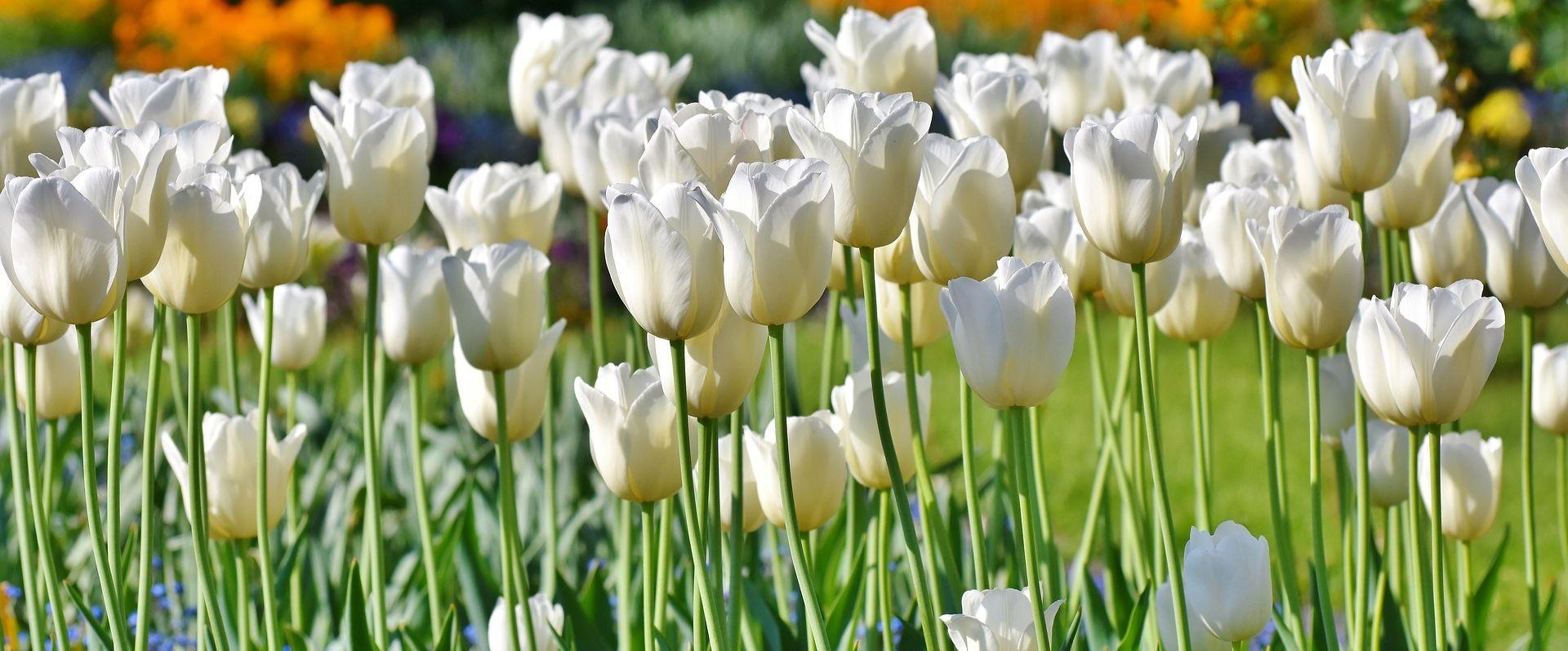 Floraart od 28. svibnja do 3. lipnja na Bundeku
