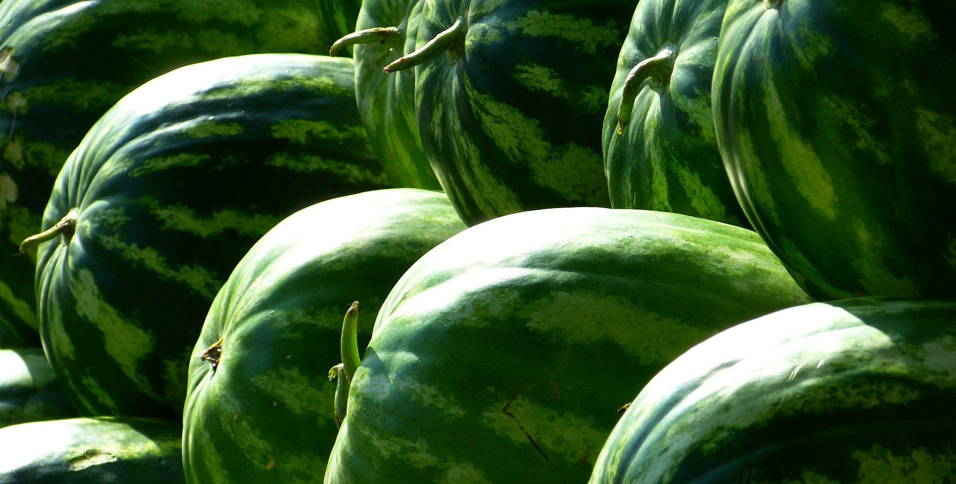 Policija među lubenicama pronašla više od 400 kilograma marihuane