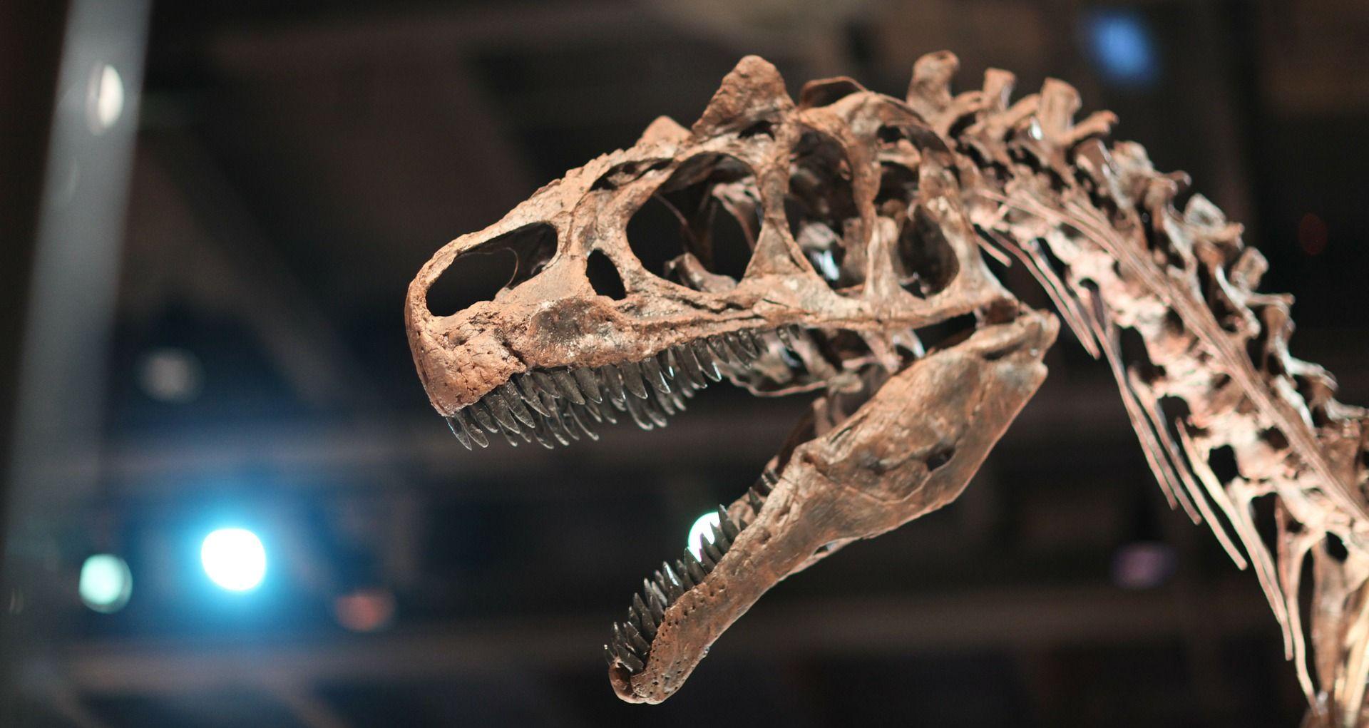 drugi načini datiranja fosila