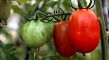 Rajsko voće i izvor zdravlja