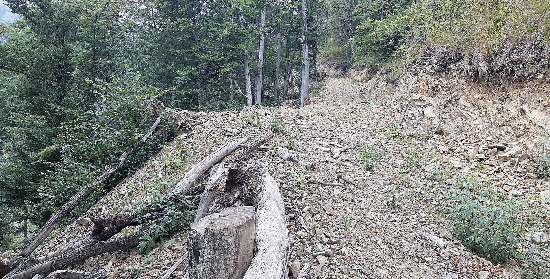 Ćorić odobrio Bandiću daljnju devastaciju šume na zaštićenom području Medvednice