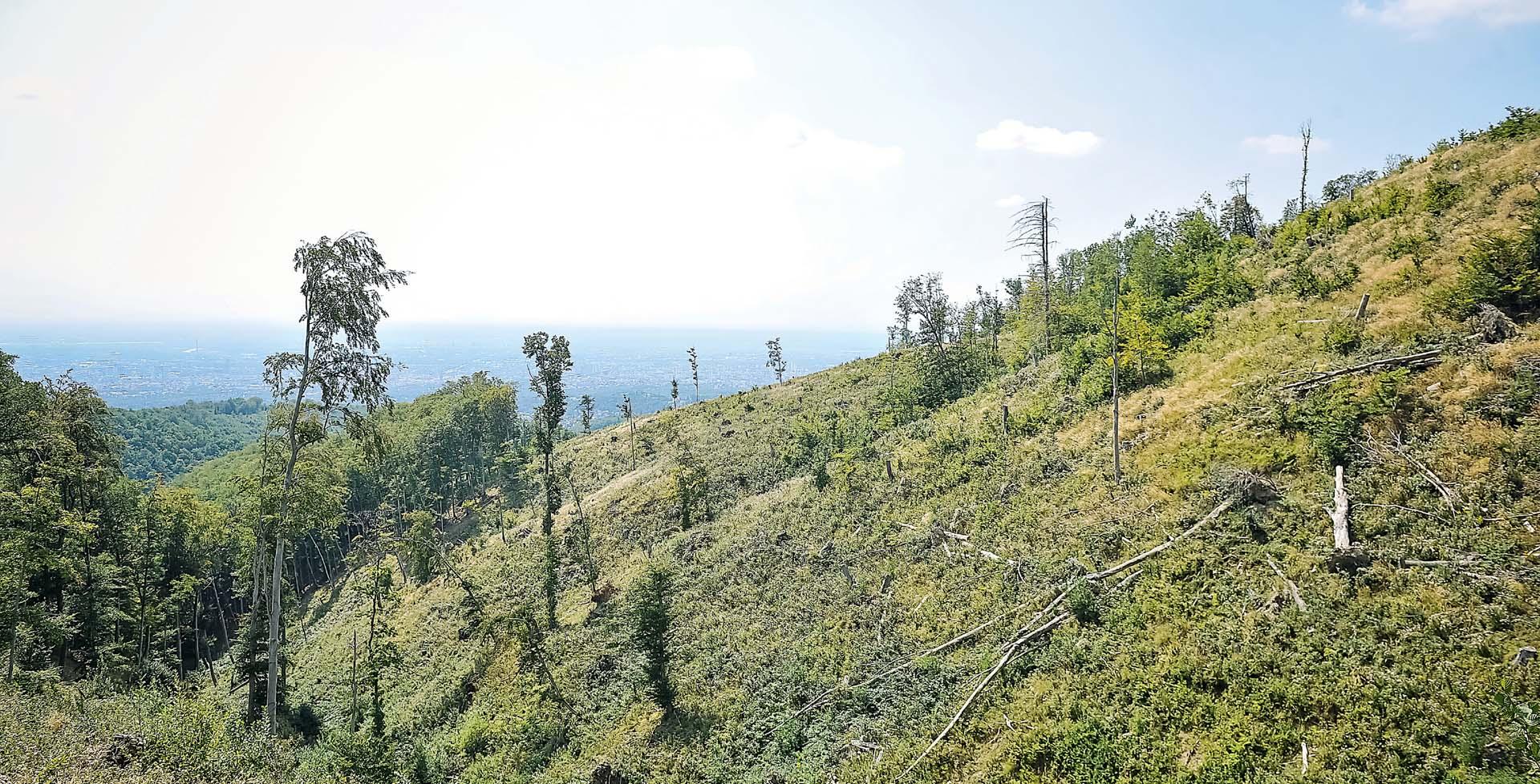 Nacionalove fotografije dokazuju laži Hrvatskih šuma