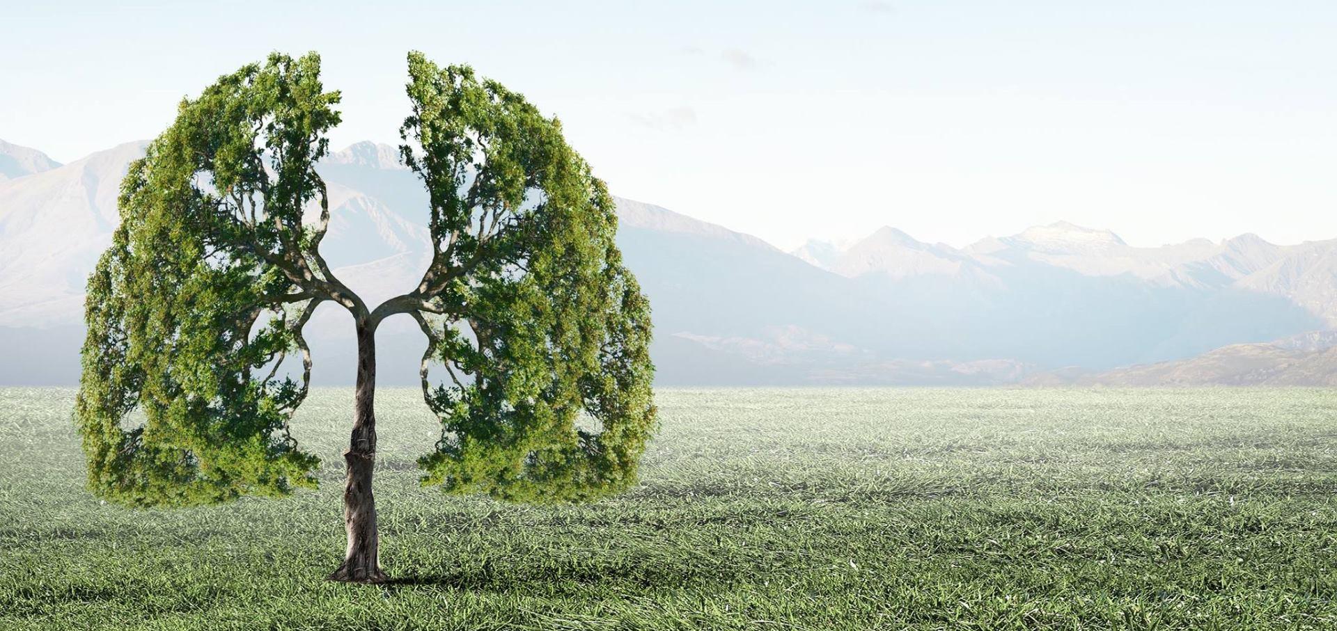 """Hrvatske šume i GI """"Dani kolektivne sadnje drveća u Hrvatskoj"""" žele ozeleniti urbane sredine"""
