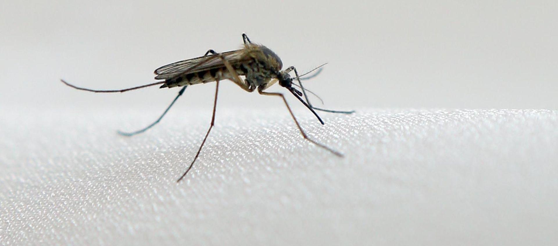 """EPIDEMIOLOGINJA """"Imamo potvrđeno 39 oboljelih od virusa Zapadnog Nila"""""""