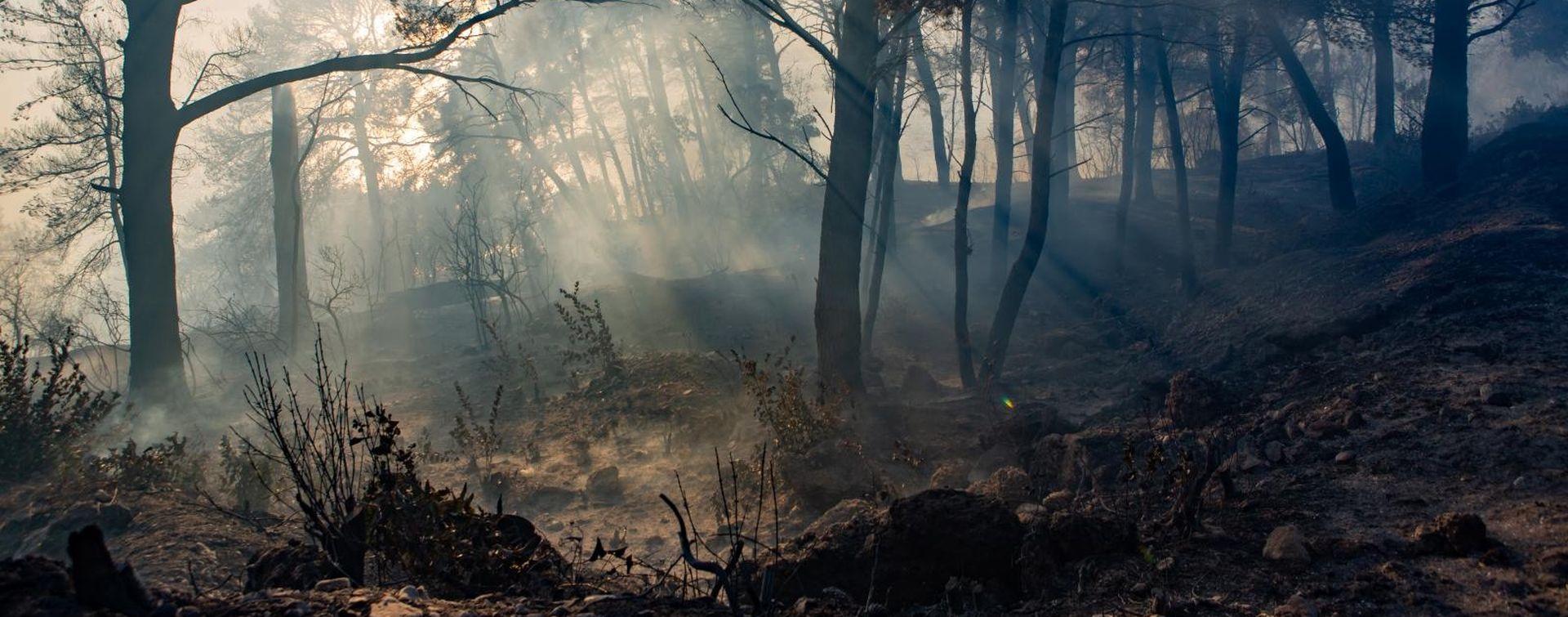 Požar kod Metkovića i dalje aktivan, na terenu 100 vatrogasaca