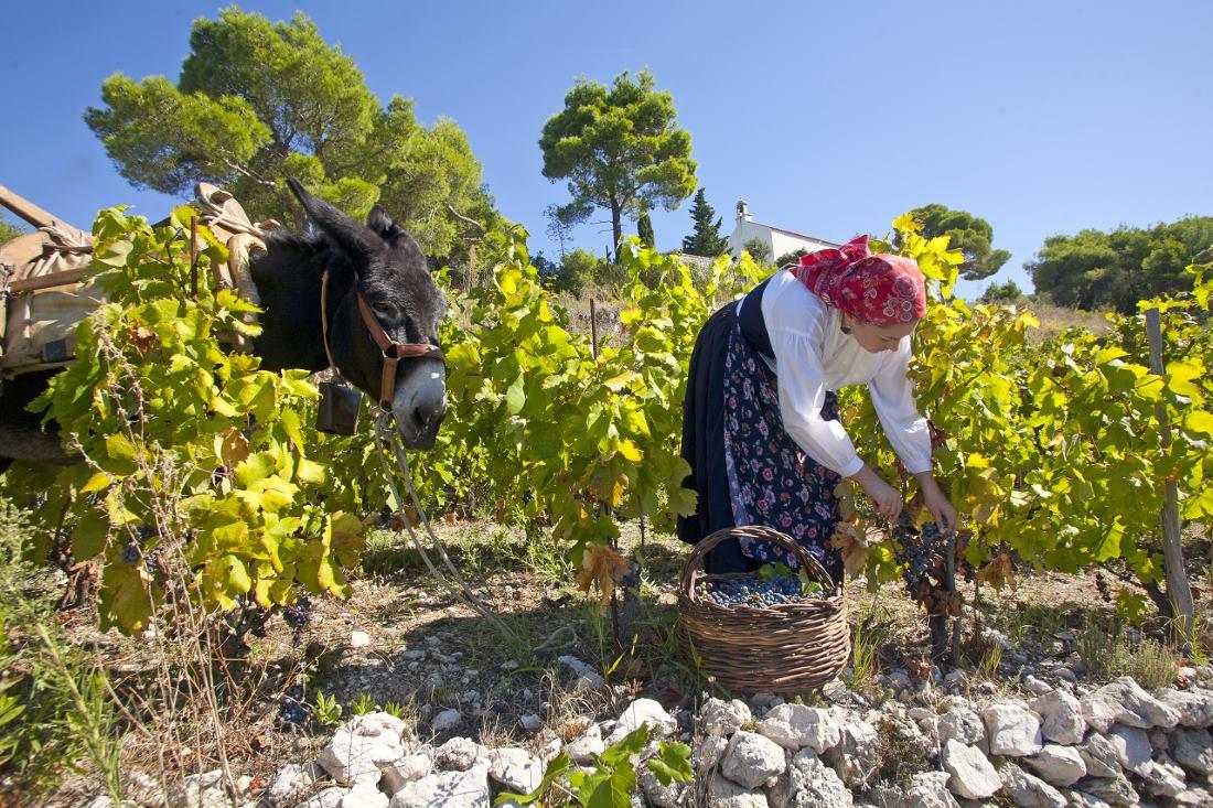 Poljoprivredna zadruga Putniković ponos je hrvatske vinarske tradicije