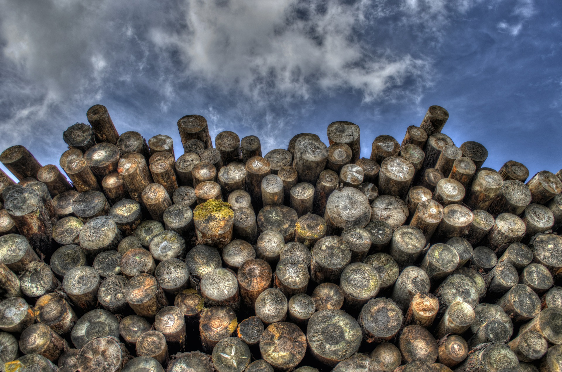 HRVATSKE ŠUME 'Ne izvozimo drvnu građu'
