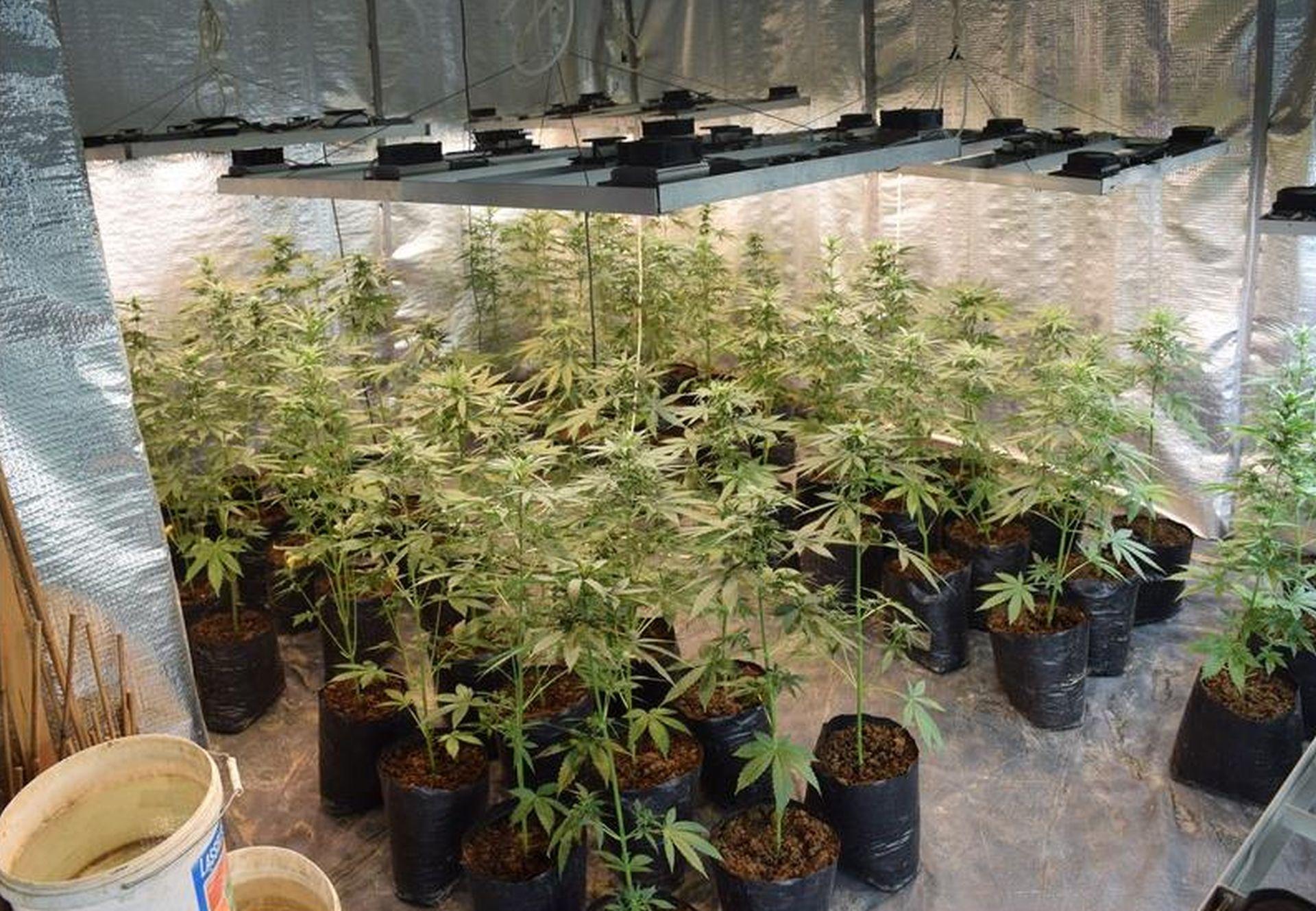 ZADAR Otkriven ilegalni laboratorij za uzgoj marihuane