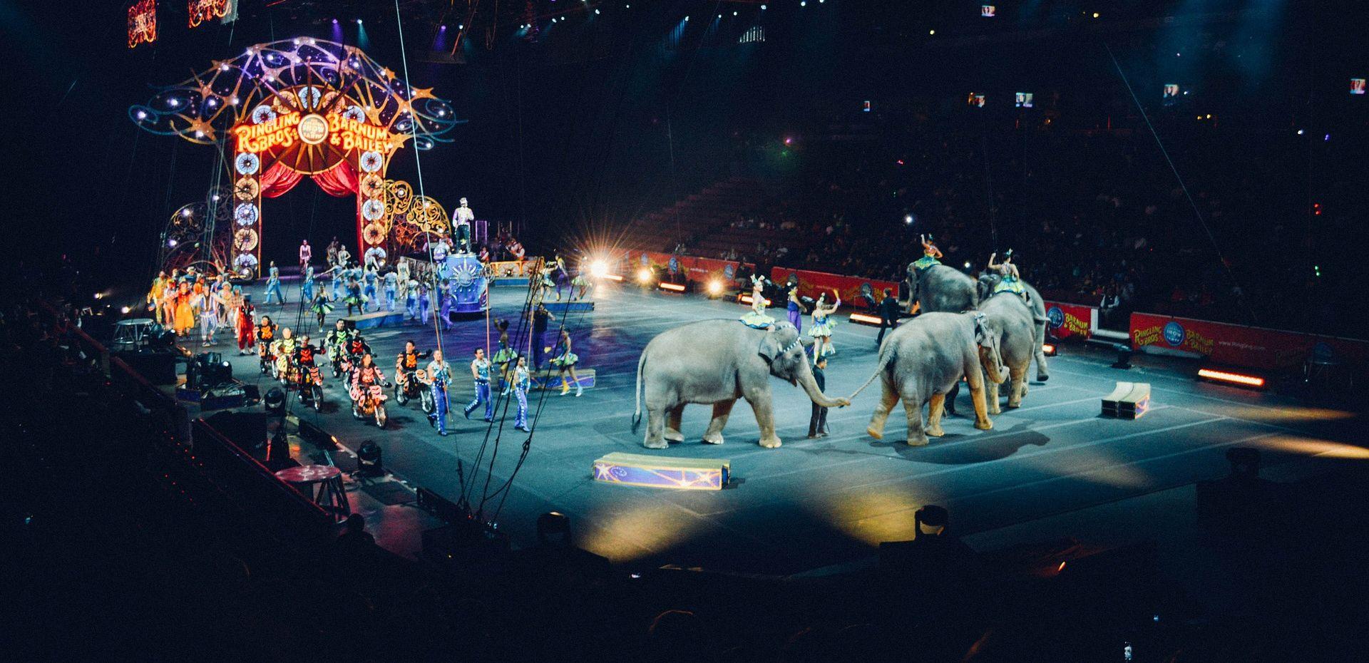 Portugalci zabranili divlje životinje u cirkusima