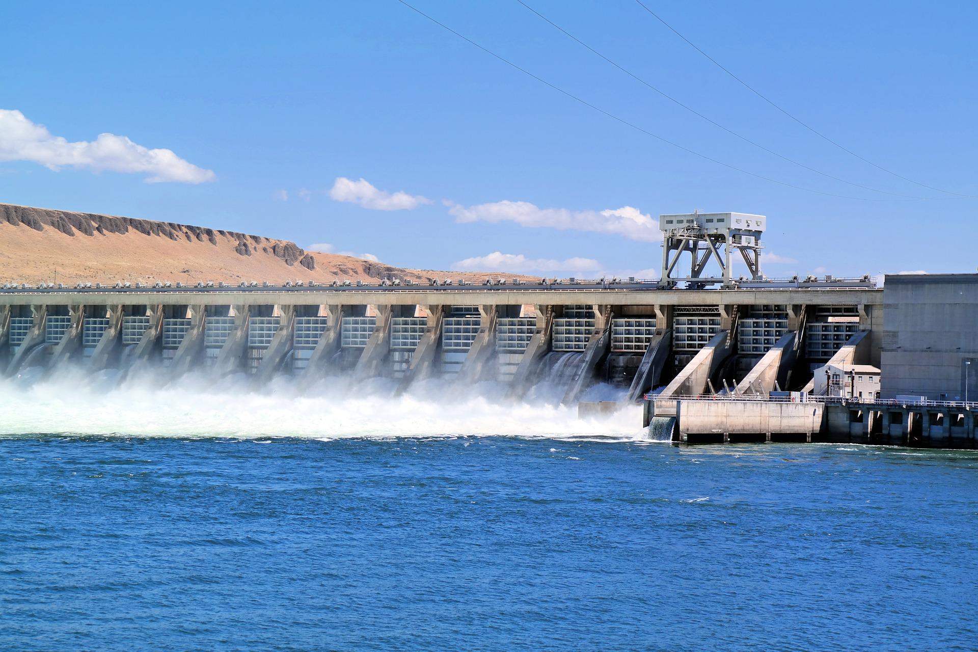Sićušni daždevnjak mogao bi zaustaviti podizanje brane u Kaliforniji