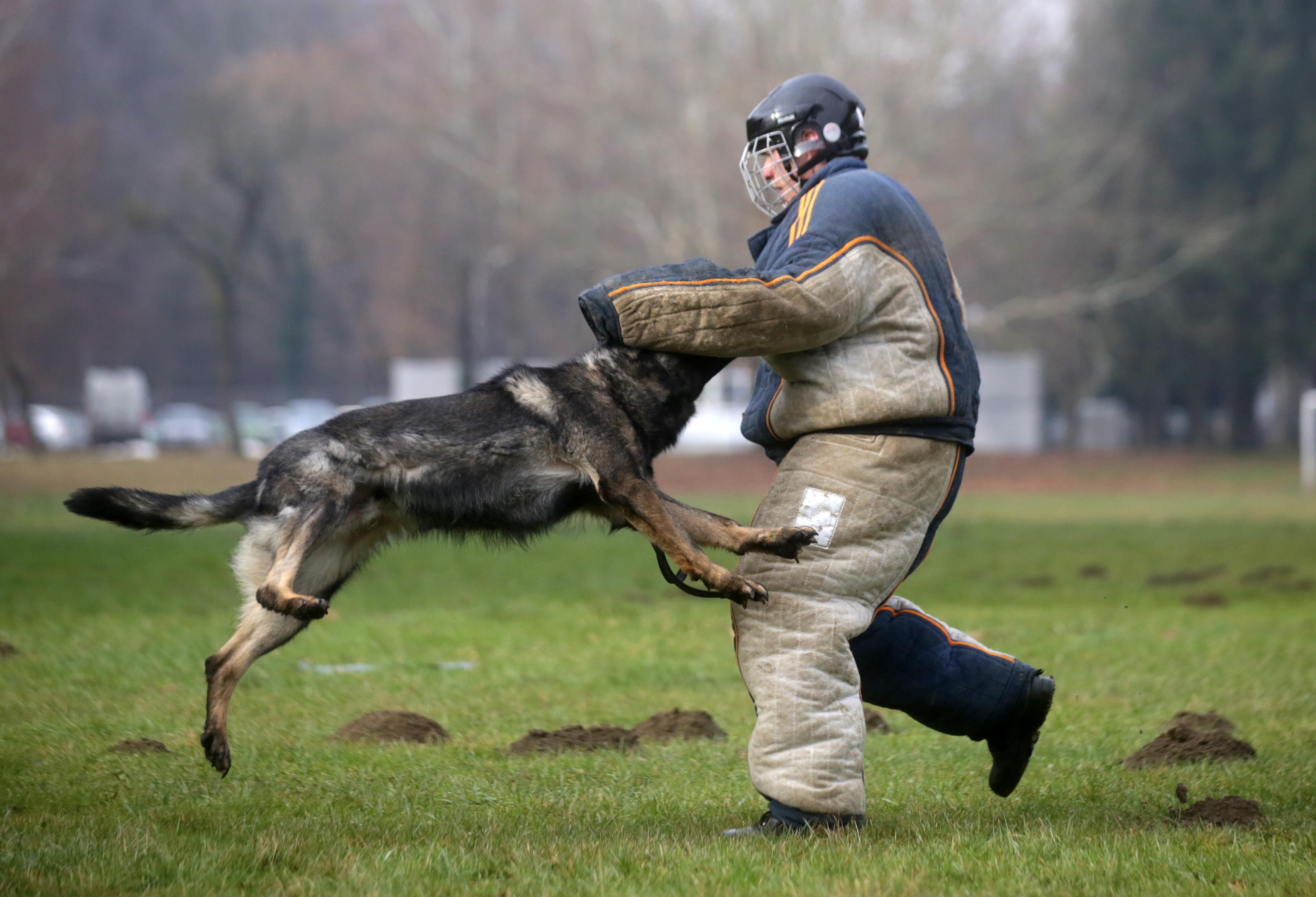 MUP kupuje pse koji mogu zamijeniti do 30 policijskih službenika