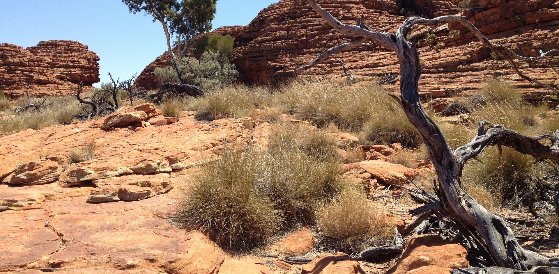 EKSTREMNE VRUĆINE Masovni pomor divljih konja u Australiji