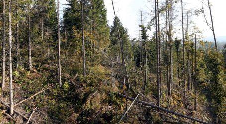 Na Marjanu od sutra sječa 20.000 potkornjakom zaraženih stabala