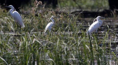 Završeno zimsko prebrojavanje, u Kopačkome ritu više od 35 tisuća ptica