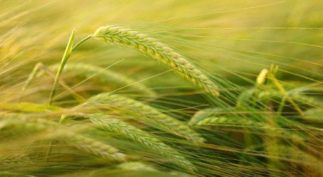 Za mala poljoprivredna gospodarstva dodatnih 65 milijuna kuna