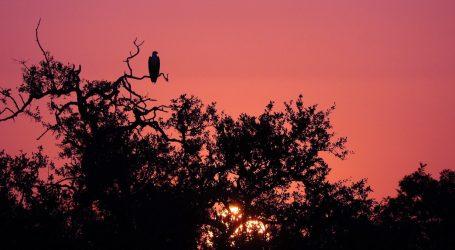 VIDEO: Čuvari Nacionalnog parka Kruger svojim životom brane prirodu i životinje