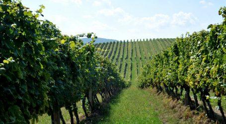 Veganska vina će biti sve traženija, dostava butelja i dronom