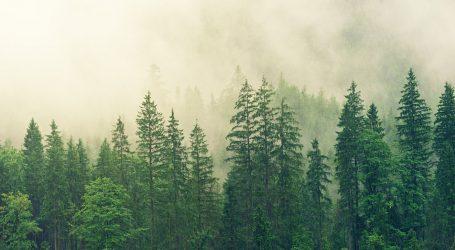 SVJETSKI DAN ŠUMA Godišnje se uništi oko 13 milijuna hektara šume