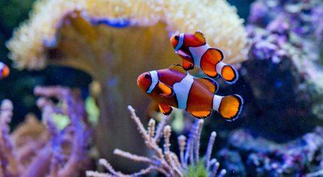 VIDEO: Globalno zatopljenje nepovoljno utječe na Veliki koraljni greben