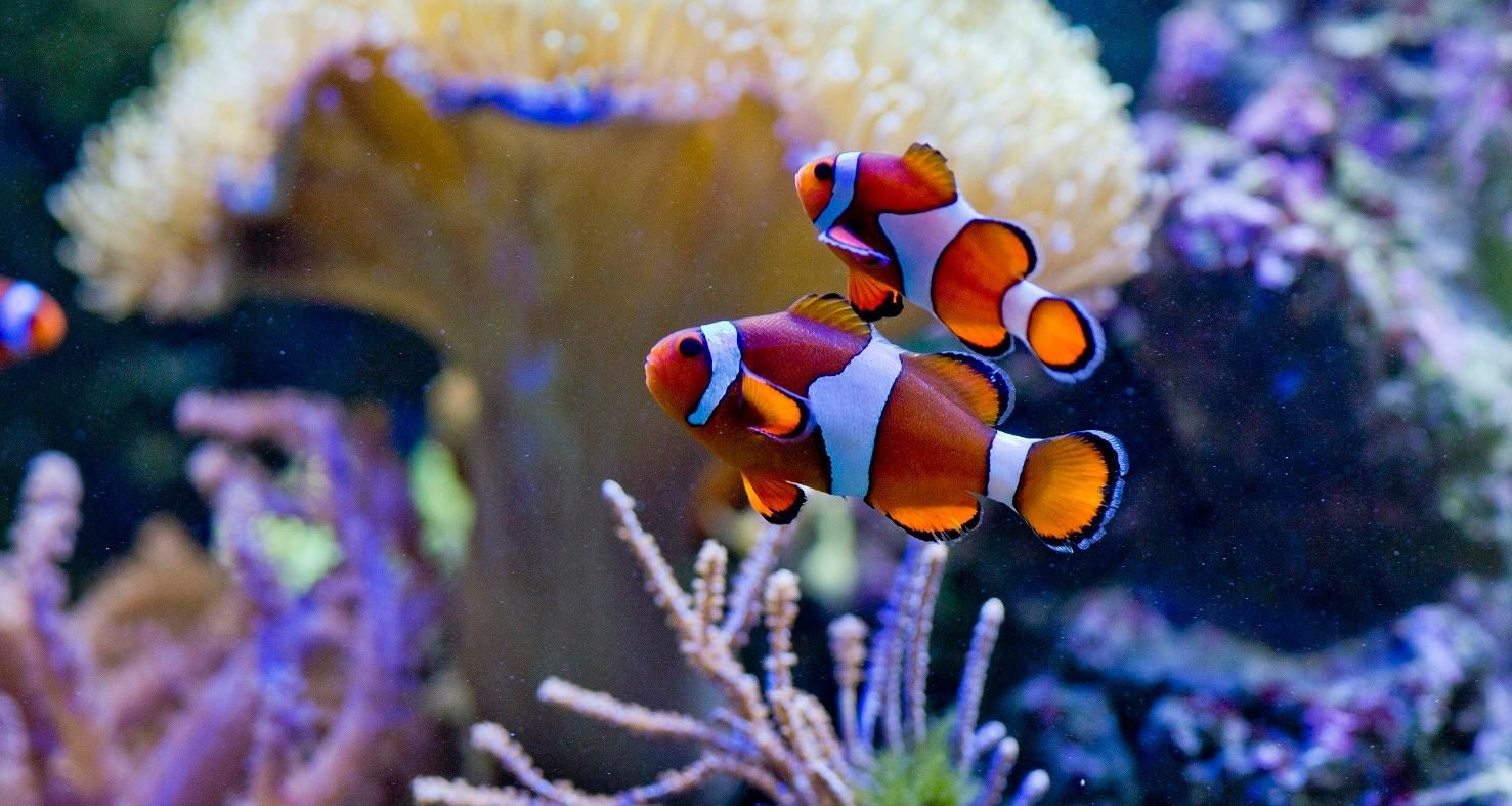 Internetske stranice za pronalaženje riba