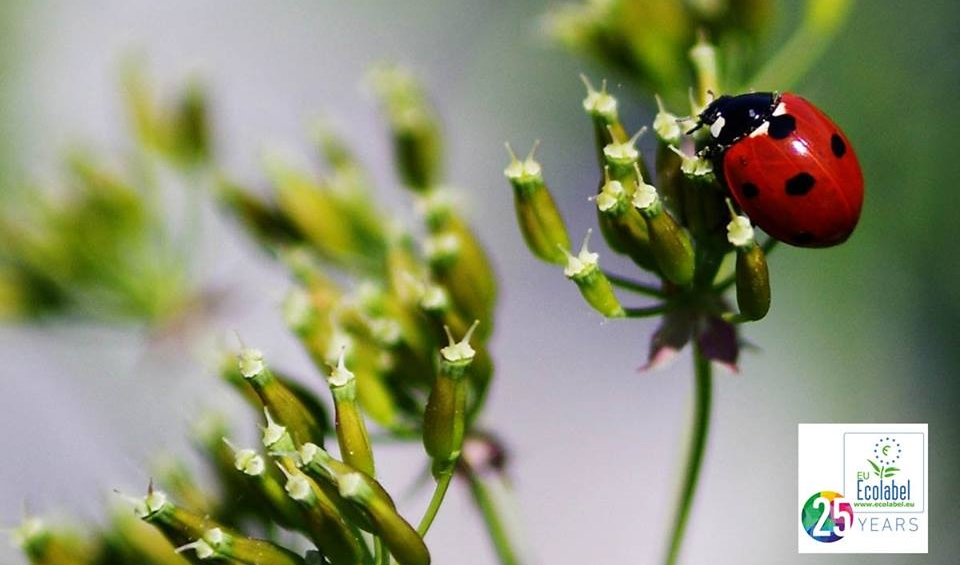 'Eco-friendly' određenost znači i bolje poslovanje tvrtki