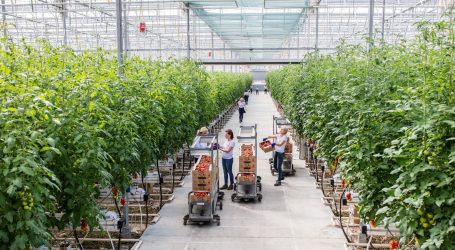 Zarja grupa pokrenula rebranding za uistinu posebnu sortu rajčice