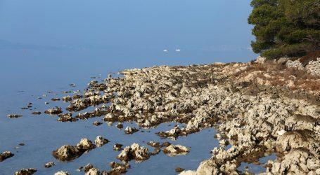 Društvo istraživača mora zabilježilo prvi masovni pomor periske u Jadranu