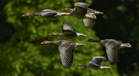 Svjetski dan ptica selica ovog vikenda u zagrebačkom ZOO-u