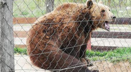 """""""Medvjedi iz Macole bit će premješteni u utočište Kuterevo"""""""