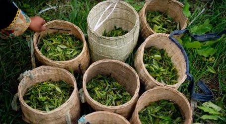 VIDEO: Čaj je jaki zaštitnik organizma