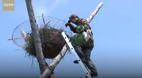 VIDEO: Orijentalne bijele rode su još uvijek ugrožena vrsta