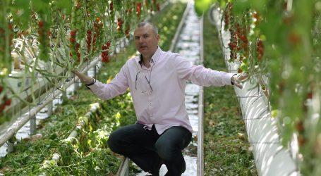 VIDEO –  ZVONIMIR BELIĆ, hrvatski kralj rajčica iz Kerestinca