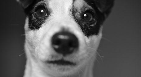 Sklonište Dumovec prepuno pasa, pozivaju se građani na udomljavanje