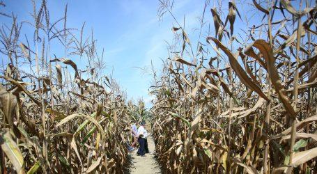 """VIDEO: Pripremite kukuruz na """"više načina"""""""