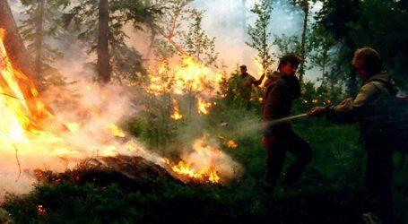 Tisuće dragovoljaca bore se sa šumskim požarima u Rusiji