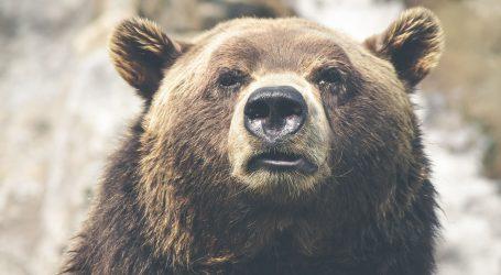 Dolazak ljudi u Europu utjecao je na izumiranje špiljskog medvjeda