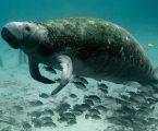 Ovo je stvarno tužno: Tajlandsko mladunče dugonga progutalo previše plastike i uginulo