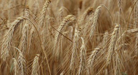 Panel UN-a o klimatskim promjenama objavljuje izvješće o budućnosti uzgoja hrane