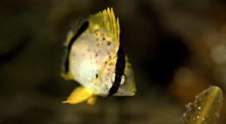 VIDEO: Topla struja dovela tropske ribe u Novu Škotsku