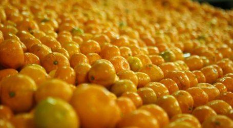 Proizvođačima mandarina gotovo 20 milijuna kuna potpore